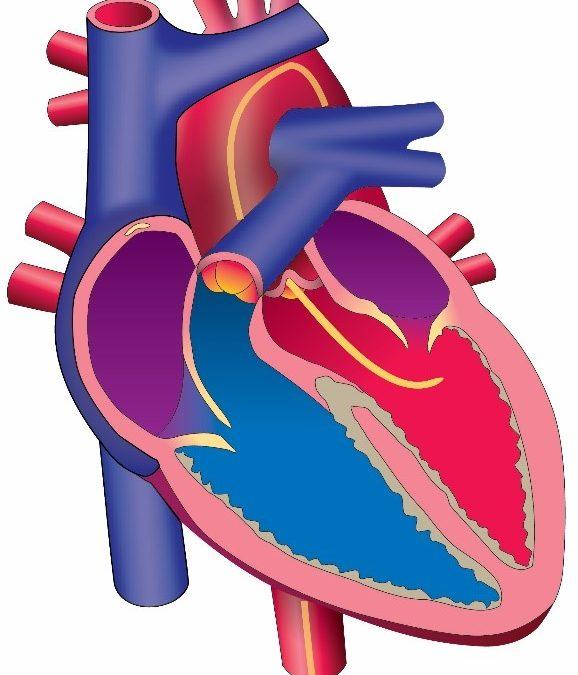 CPT Coding for Cardiac Catheterization